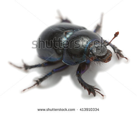 Earth-boring dung beetles clipart #11