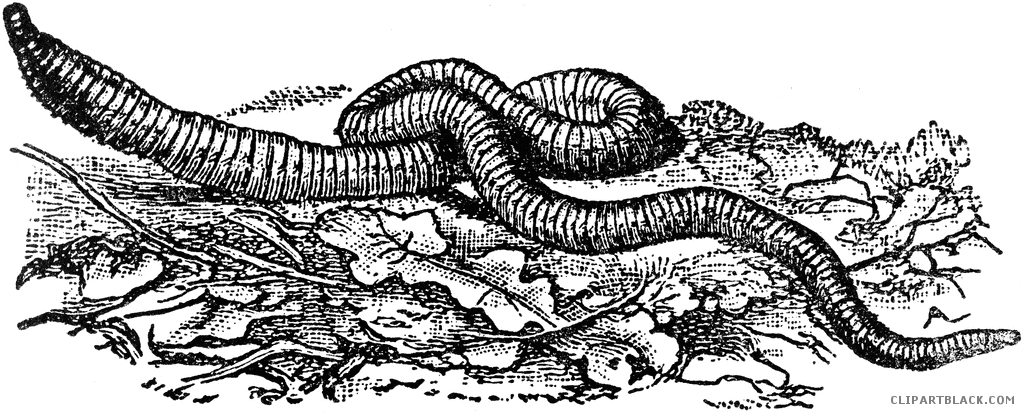Earthworm clipart black and white 3 » Clipart Station.