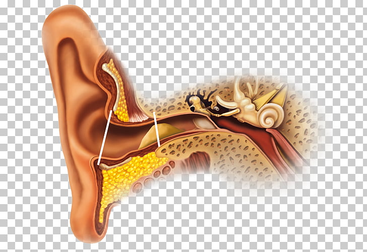 Earwax Ear canal Gland Secretion, ear PNG clipart.