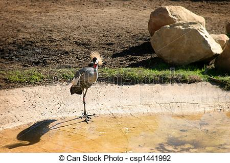 Stock Photo of East African Crowned Crane.