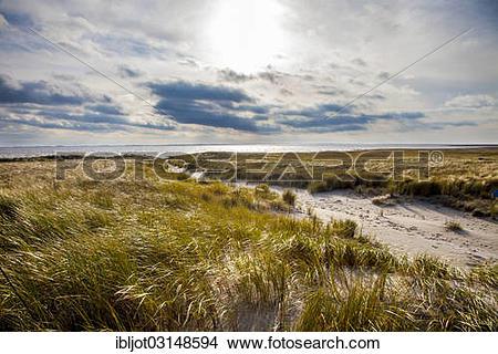 """Stock Photo of """"Marsh landscape in winter, Spiekeroog, East."""