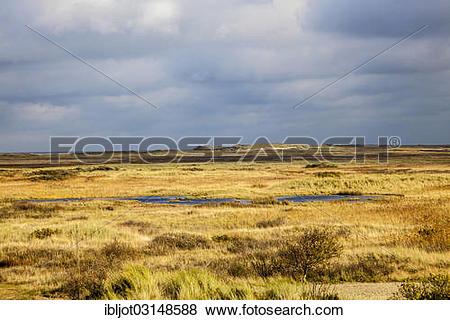 "Pictures of ""Marsh landscape in winter, Spiekeroog, East Frisian."