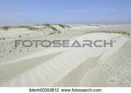 "Stock Photo of ""Foredunes at a beach, Juist, East Frisian Islands."