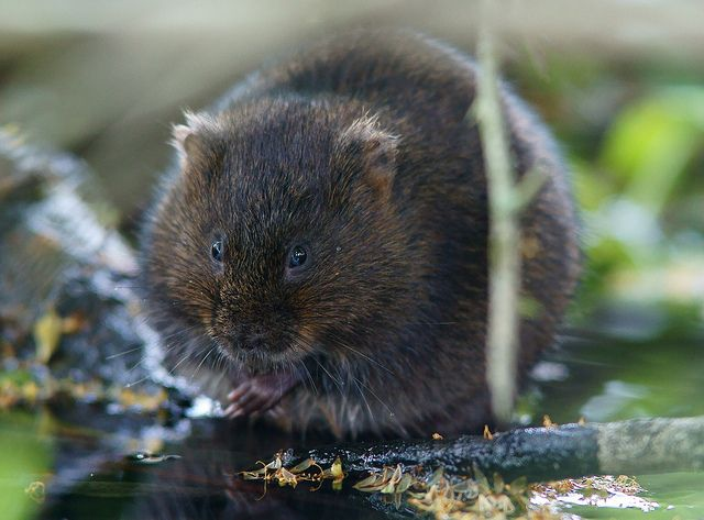 1000+ images about Animals: European, Arctic on Pinterest.
