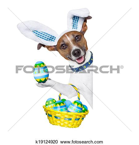 Stock Photography of dog easter bunny k19124920.
