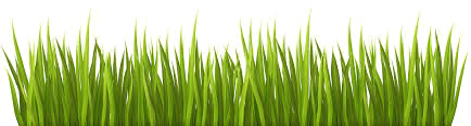 Easter Grass PNG Download Image.