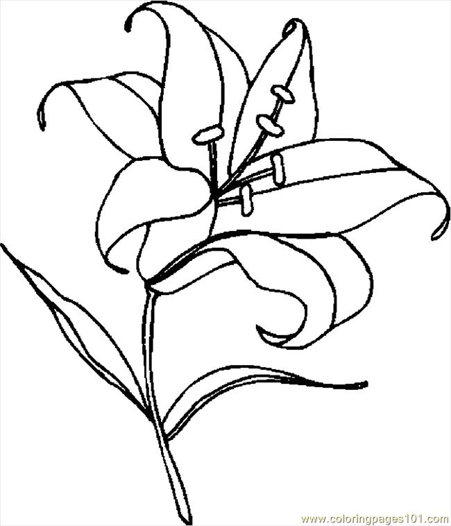 Similiar Easter Lily Line Drawing Keywords.