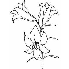 Single Easter Lily Clipart.