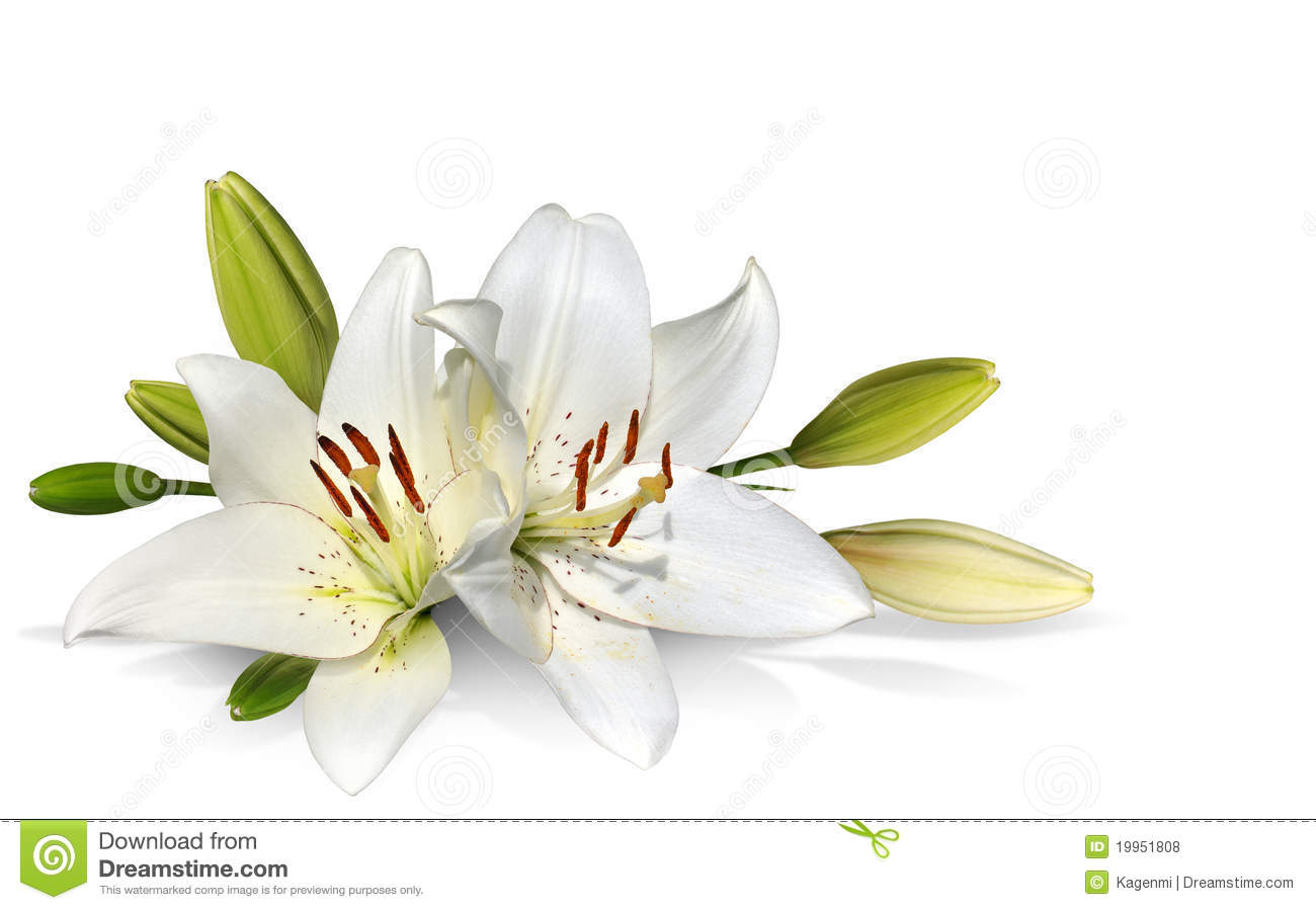 31+ Easter Lily Clip Art.