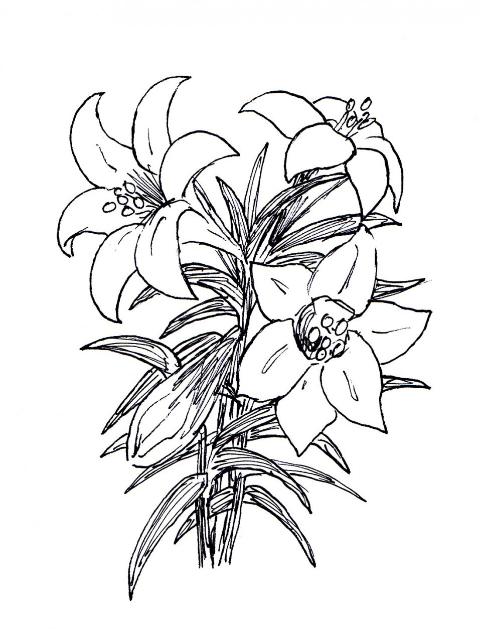 Free Easter Lily Cliparts, Download Free Clip Art, Free Clip Art on.