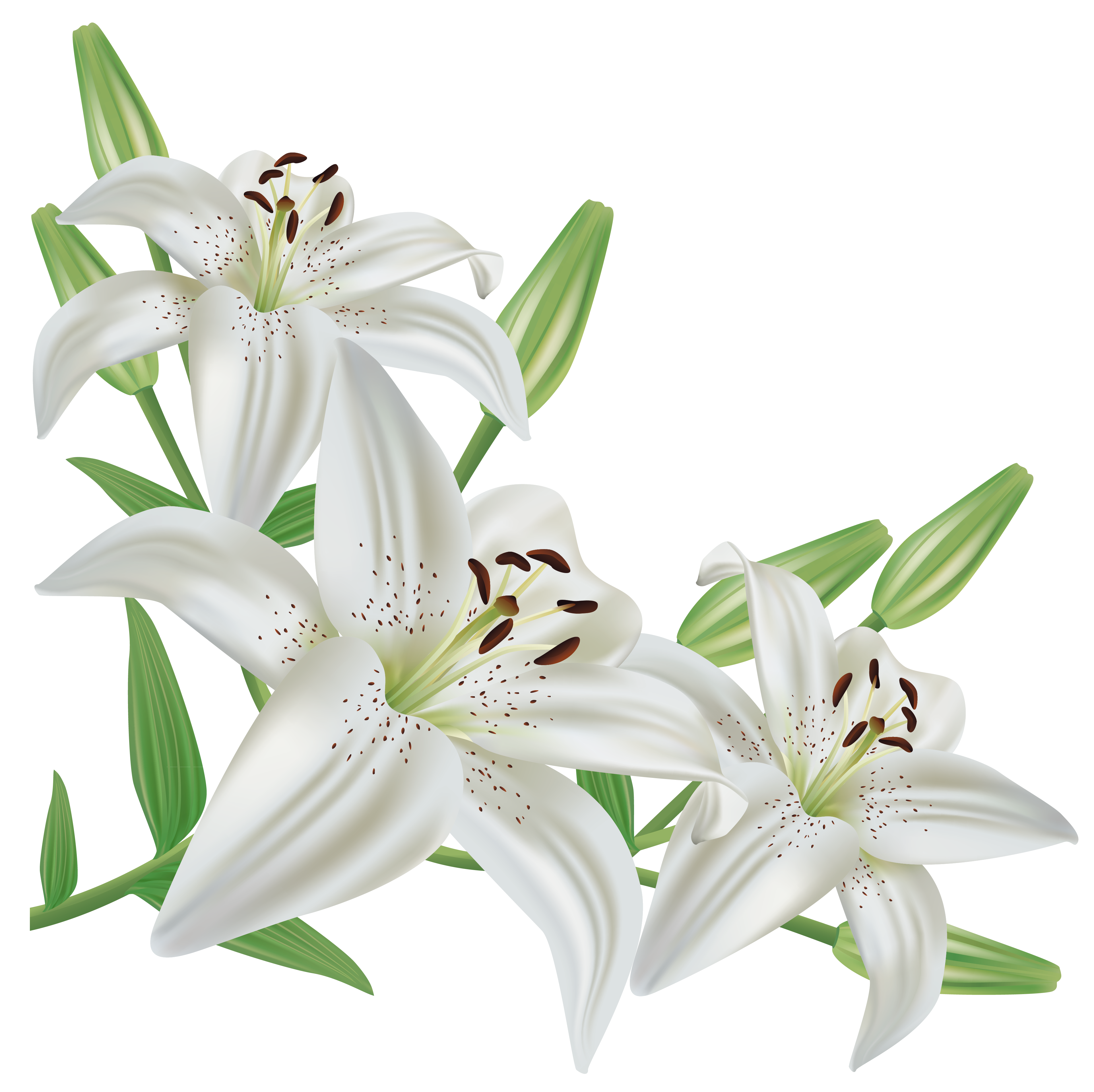 Free clipart easter lily clipart images gallery for free download.