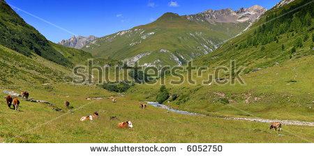 """alpine Vegetation"" Stock Photos, Royalty."