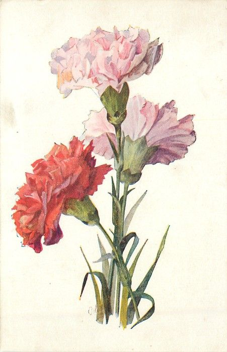 1000+ images about Art / Pansies & Carnations on Pinterest.