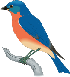 Eastern Bluebird Clipart.