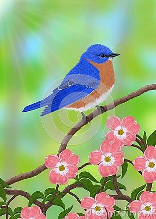 Eastern Bluebird Clipart.