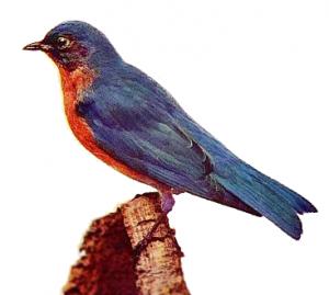Bluebird Clip Art Download.