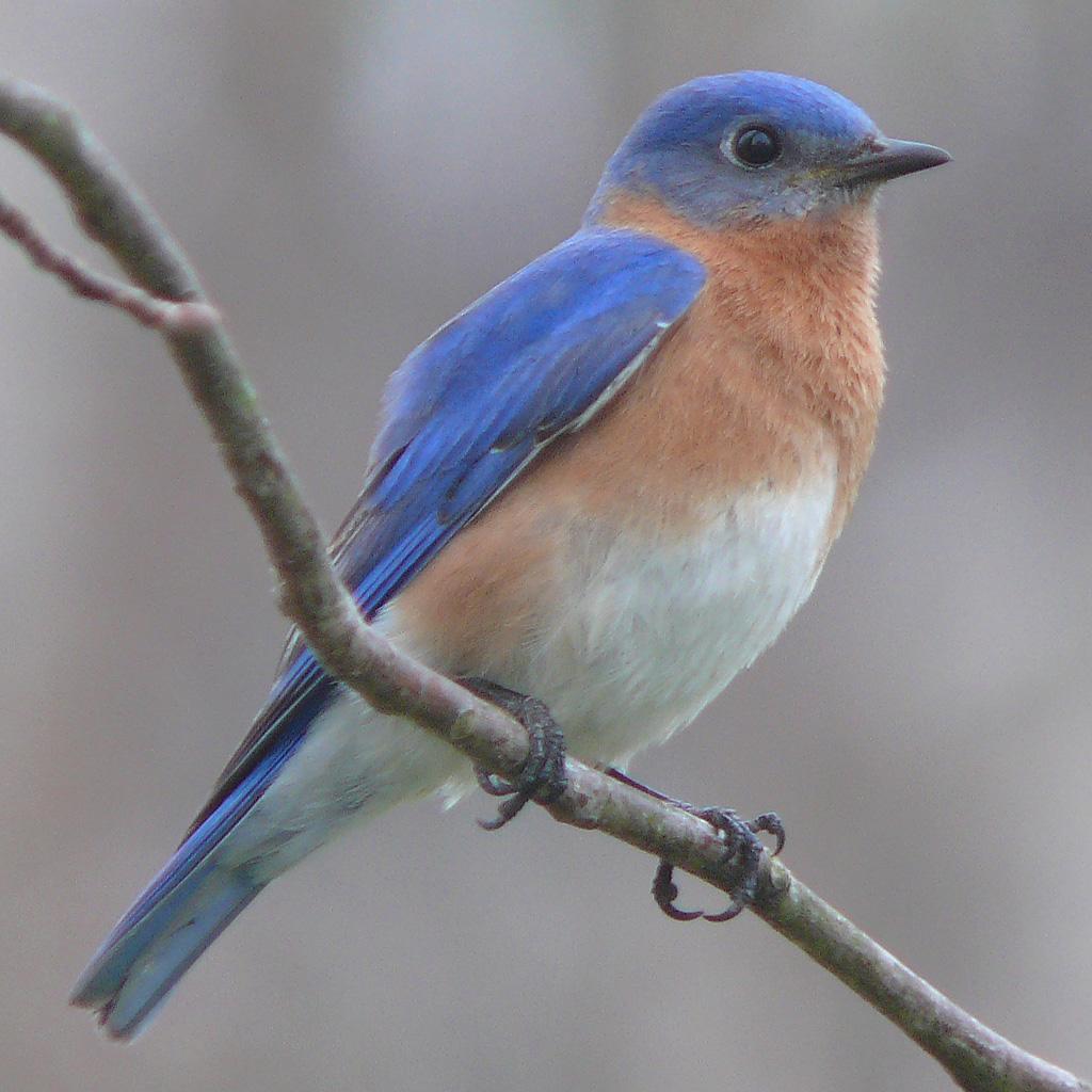 List of birds of Missouri.
