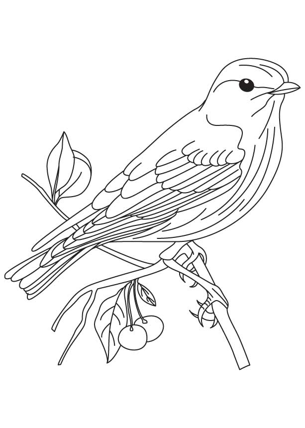 Eastern Goldfinch Pictures Bluebird Coloring Page