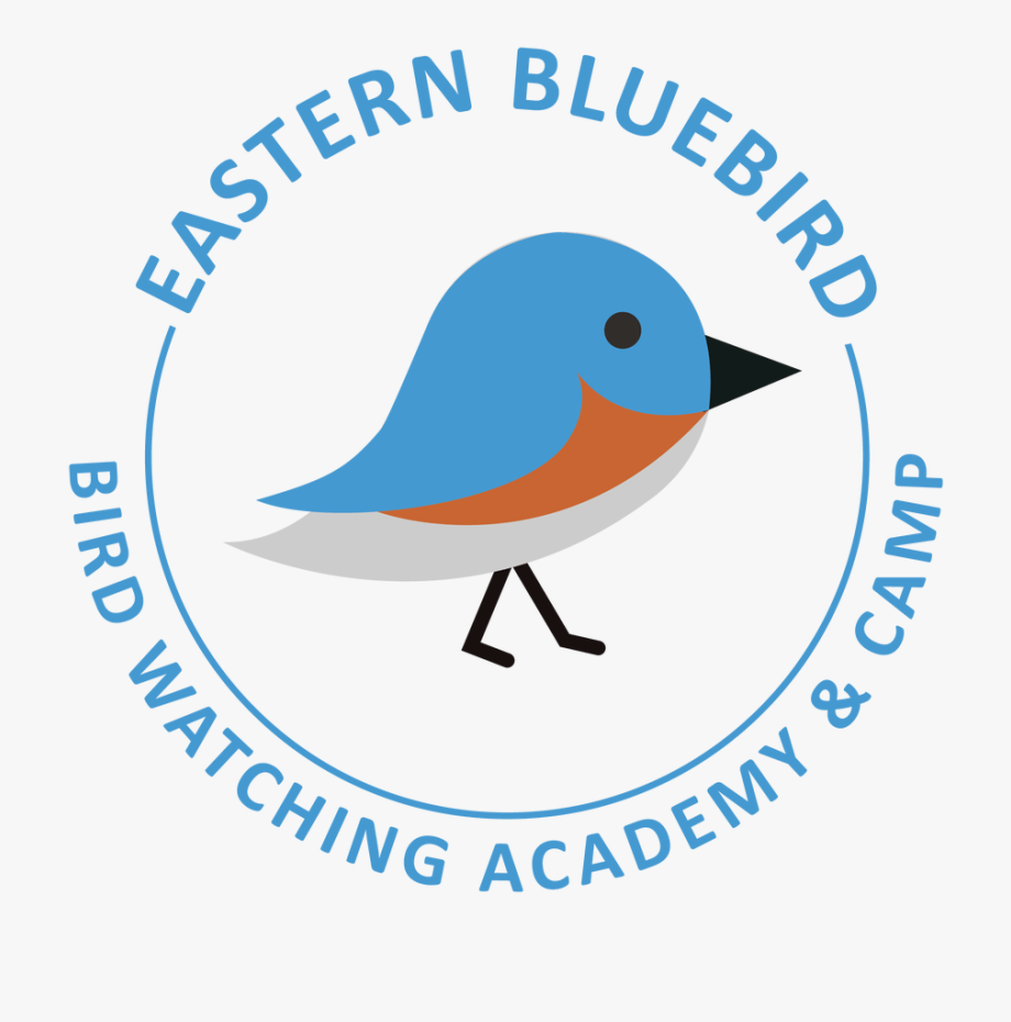 Eastern Bluebird Clipart , Png Download.