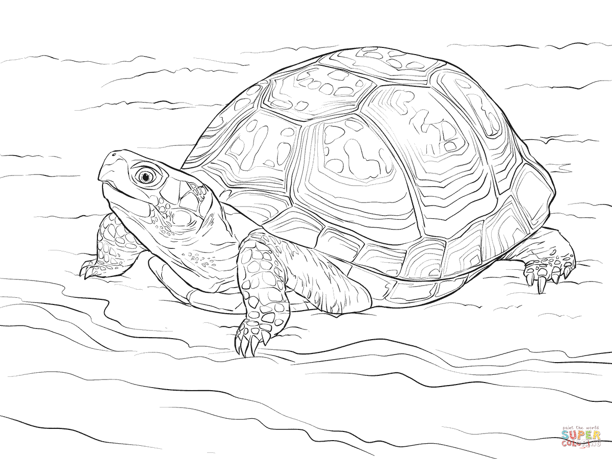 Clipart realistic black and white box turtle.