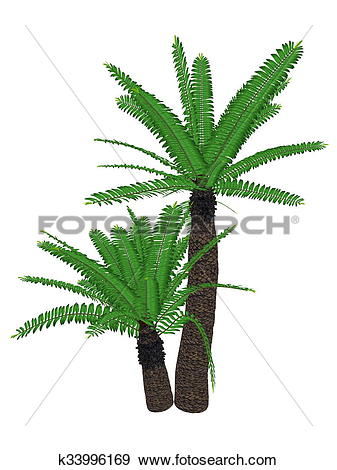 Stock Illustration of Breadtree, broodboom, eastern cape giant.
