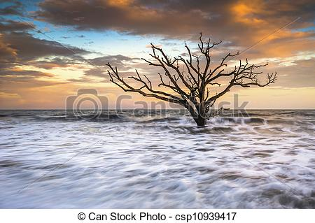 Stock Photography of Botany Bay Edisto Island SC Boneyard Beach.