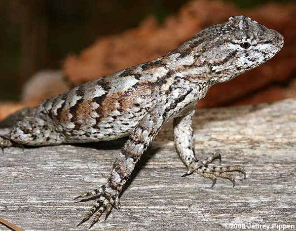 1000+ images about LizaRds aRe Sweet on Pinterest.
