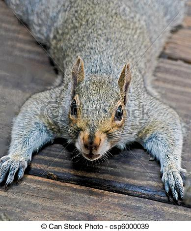 Stock Photographs of Squirrel doing pushups.