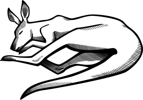 Eastern Gray Kangaroo Clip Art, Vector Images & Illustrations.