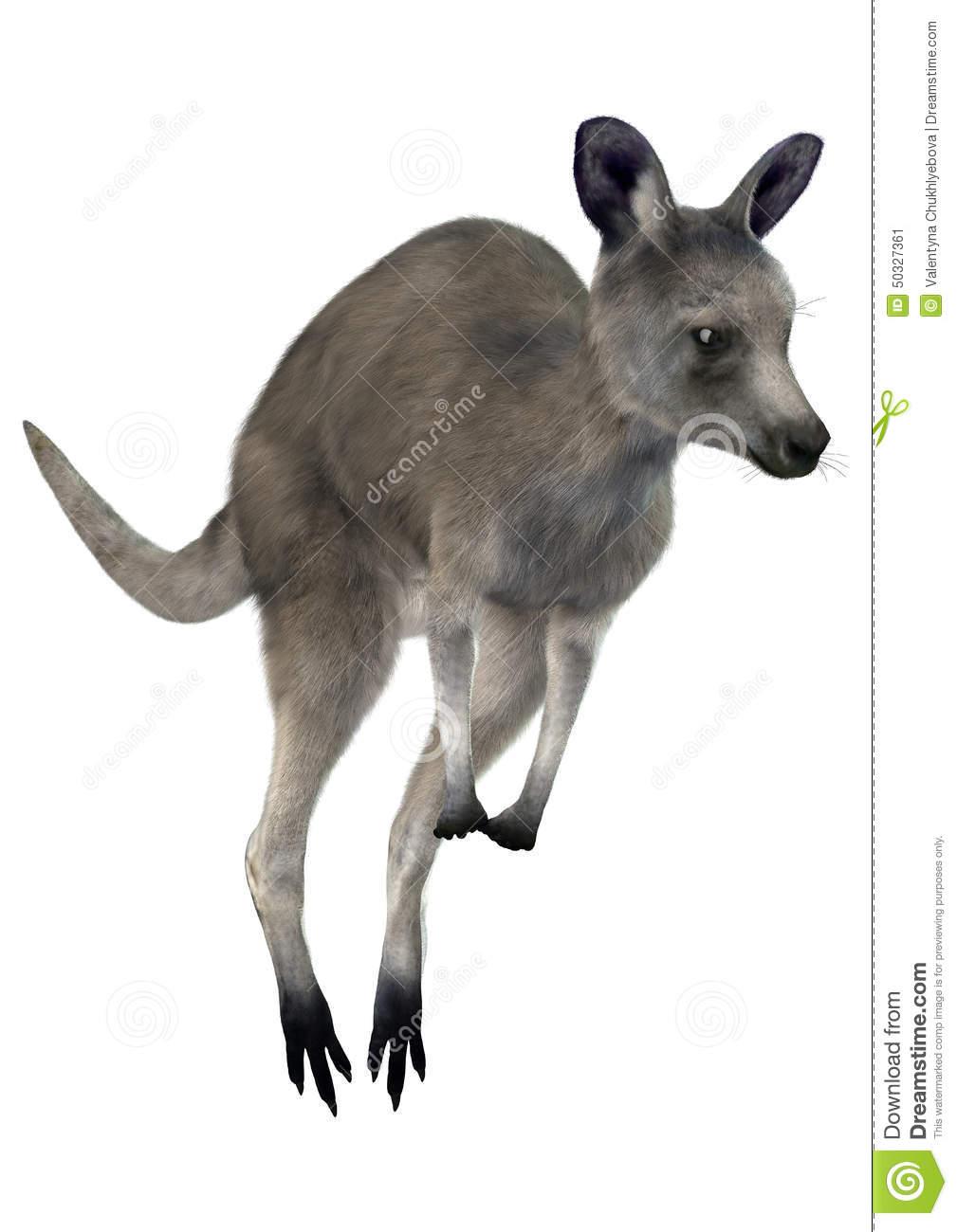 Eastern Grey Kangaroo Stock Illustration.