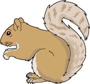 Gray Squirrel Clipart.