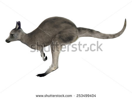 Great Grey Kangaroo Stock Photos, Royalty.