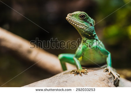 Chinese Water Dragon Stock Photos, Royalty.