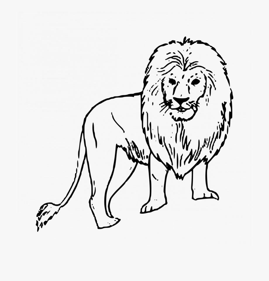 Large Size Of How To Draw A Lion Anime Step By In Pencil.