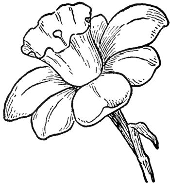 1000+ ideas about Easy Flower Drawings on Pinterest.