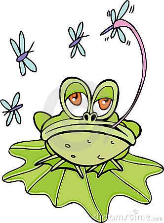 Frog Catching Fly Tongue Stock Photos, Images, & Pictures.