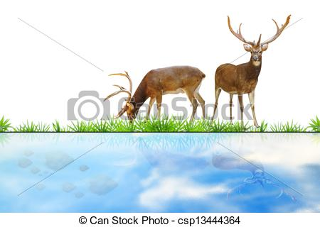 Deer eating grass clipart.