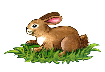 Rabbit eating grass clipart.