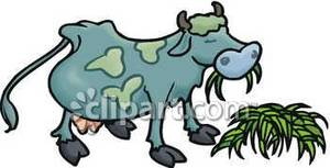 Eating cow clipart.