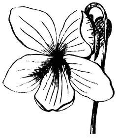 black and white botanical art.
