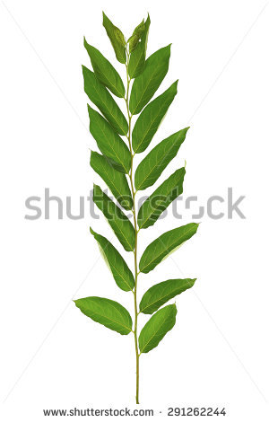 Magnoliophyta Stock Photos, Royalty.