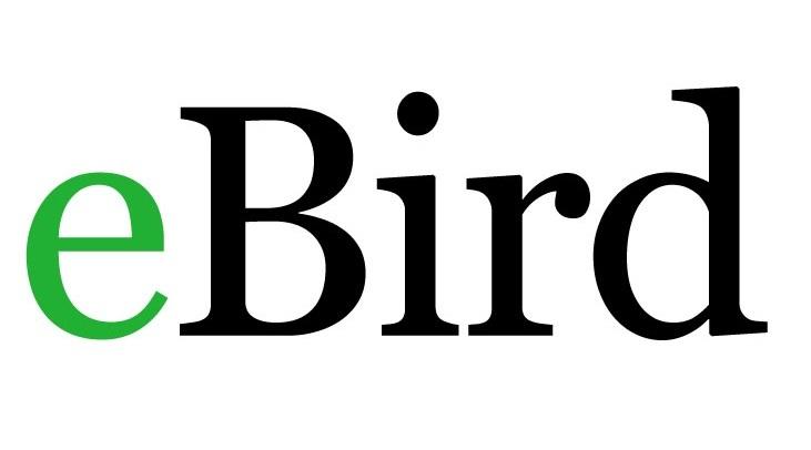 ebird logo #2