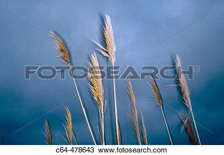 Stock Photo of Ebro delta. Catalunya. Spain. c64.