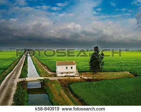 Stock Photograph of Aerial view of rice paddies and Cottage in the.