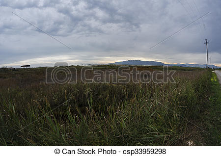 Stock Photographs of Ebro delta landscape csp33959298.