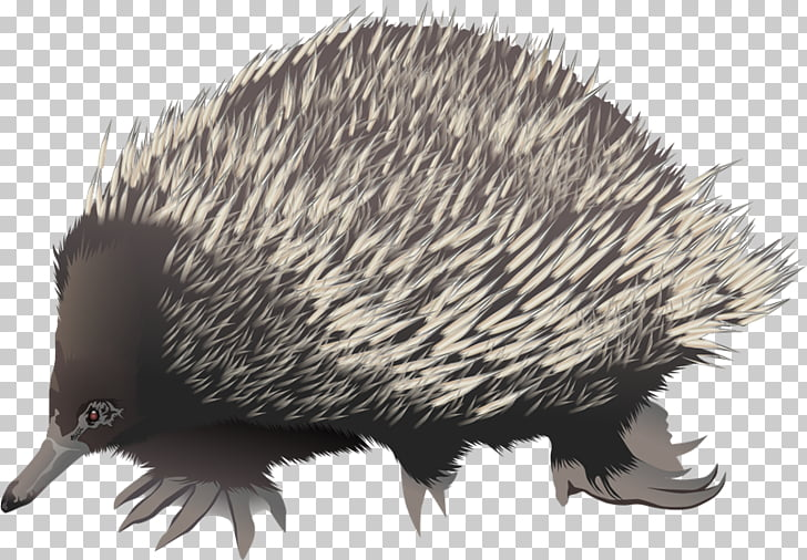 Knuckles the Echidna Anteater Short.