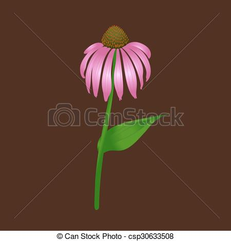 Vector Clipart of Echinacea purpurea on a brown background.