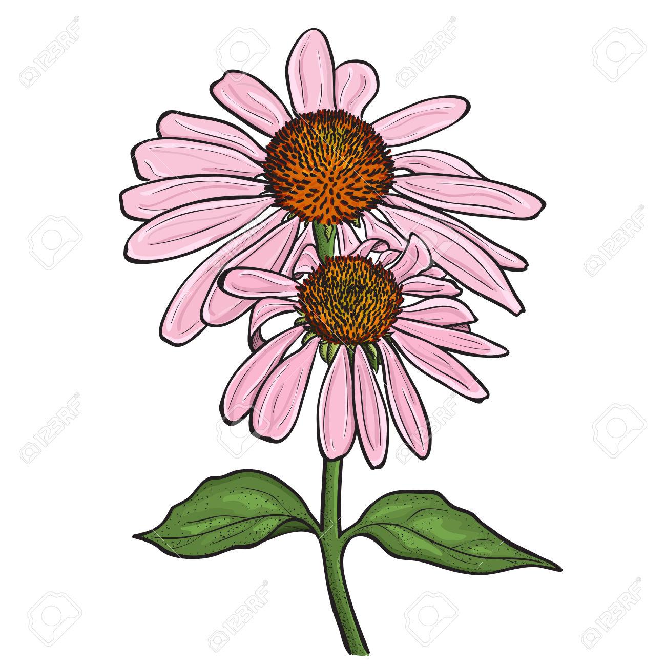 Hand Drawn Flowers.