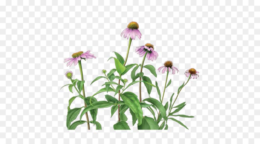 Purple Flower png download.