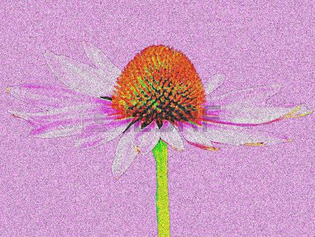 Purpurea Stock Vector Illustration And Royalty Free Purpurea Clipart.